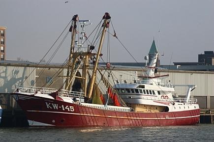 Carharina KW-145