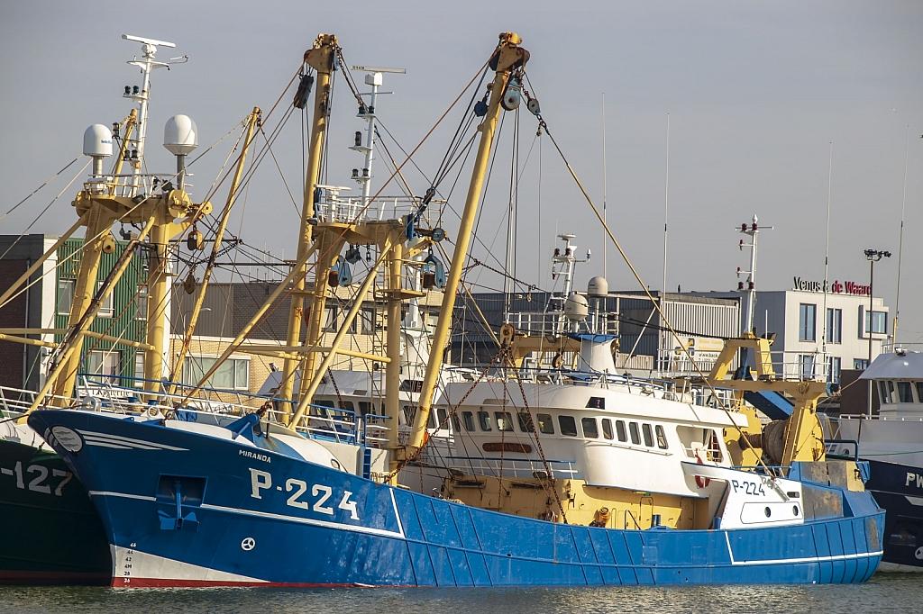Miranda P-224 -  IMO n°  8619948